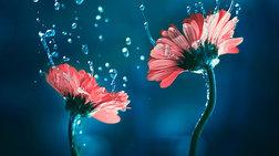 Εικόνες λουλουδιών που σου αλλάζουν τη διάθεση