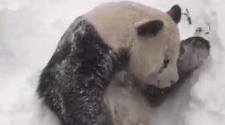 Το χιόνι στη Ουάσινγκτον έκανε ένα πάντα ευτυχισμένο! [Βίντεο]