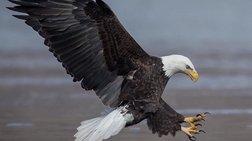 Μοναδικές φωτογραφίες που αποδεικνύουν πόσο χαίρονται τα ζώα στη φύση