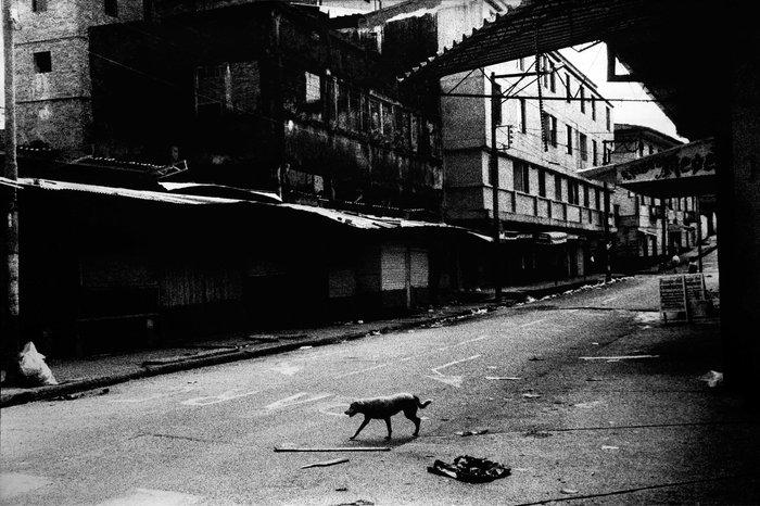 Ποιός φωτογράφισε τις «μελαγχολικές πόρνες» του Γκαμπριέλ Γκαρσία Μάρκες; - εικόνα 5