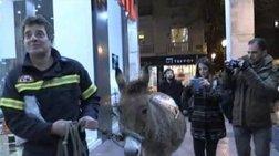 Απίστευτο:«Συνελήφθη» γάιδαρος στην πορεία των ενστόλων