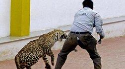 panikos-se-sxoleio-stin-india-apo-eisboli-leopardalis