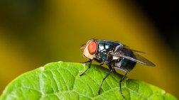 Τι παθαίνουν οι μύγες αν μείνουν 60 χρόνια στο σκοτάδι