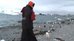 Ο πατριάρχης Κύριλλος κάνει ερωτήσεις σε πιγκούινους