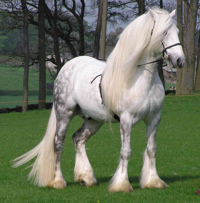 pinterestThe Percheron