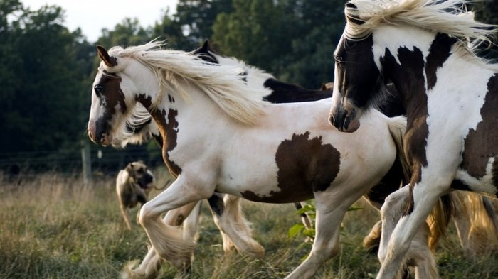 pinterestThe Pinto Horse