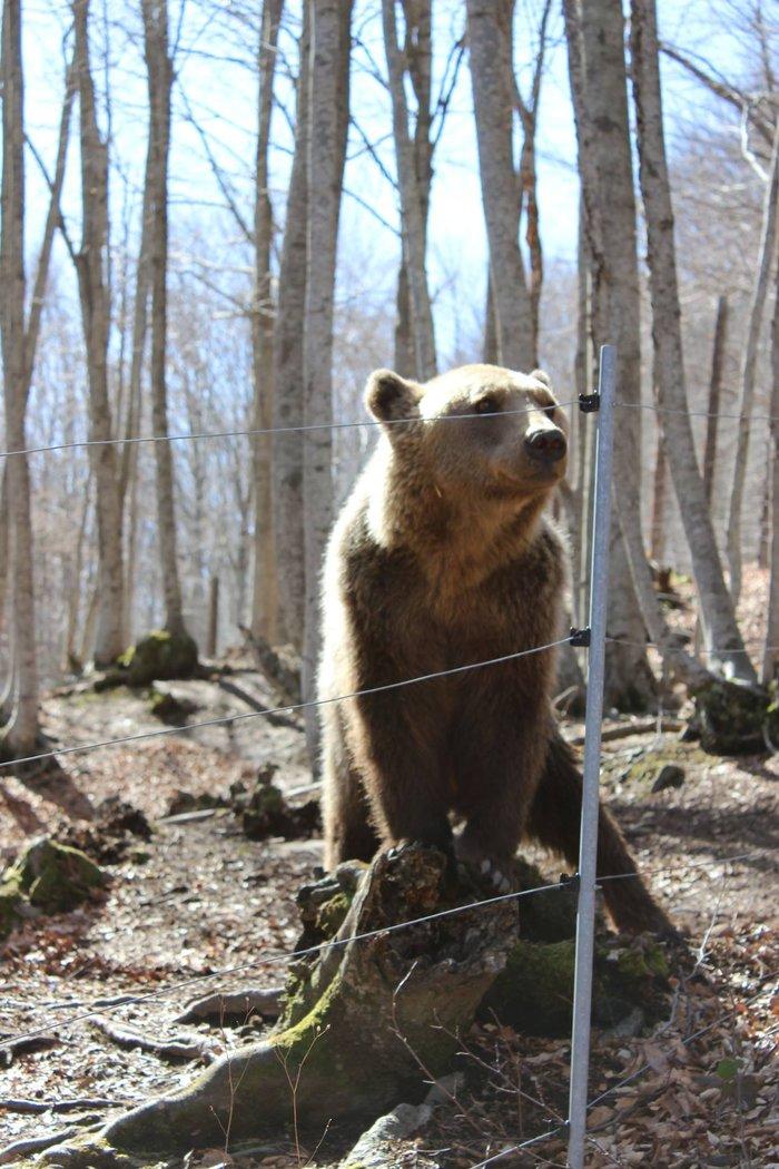 Και επισήμως ήρθε η Ανοιξη: Ξύπνησαν οι αρκούδες απο τη χειμερία νάρκη