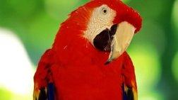Φιλούσε άλλη πίσω από την πλάτη της και το πε ο παπαγάλος