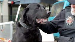 «Προσλήψεις» σκύλων στα τελωνεία για τα κρυμμένα μετρητά
