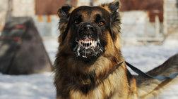 Στο νοσοκομείο αγοράκι 18 μηνών μετά από επίθεση σκύλου στο Ηράκλειο