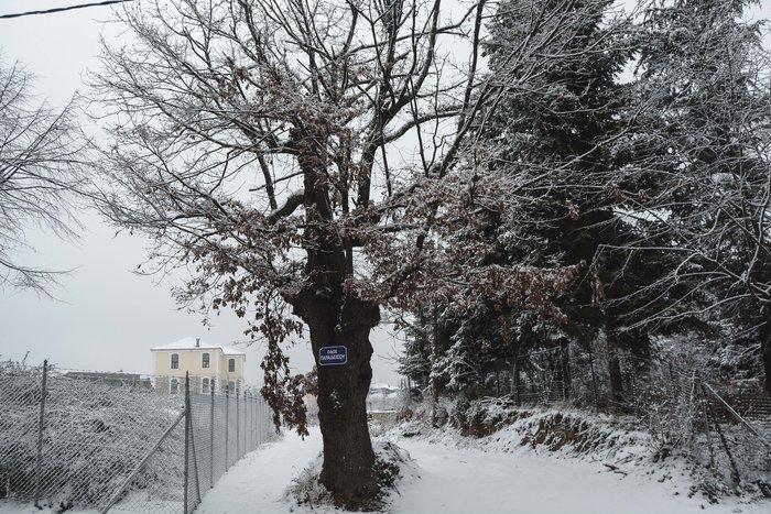 16 υπέροχες φωτογραφίες από την χιονισμένη Αρναία Χαλκιδικής - εικόνα 15