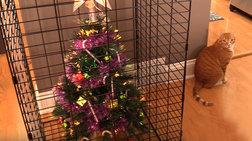 Πως θα σώσετε το Χριστουγεννιάτικο δέντρο από τα κατοικίδια σας