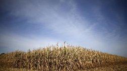 Το Μεξικό λέει όχι στο γενετικά τροποποιημένο καλαμπόκι