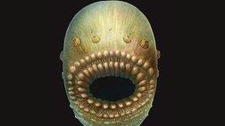 Απολίθωμα ηλικίας 540 εκατ. ετών είναι πρόγονος του ανθρώπου