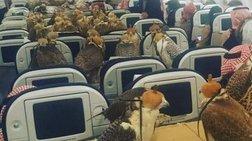 Σαουδάραβας πρίγκιπας έκλεισε 80 θέσεις στο αεροπλάνο για τα... γεράκια του