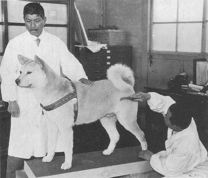 Ο σκύλος που έμεινε πιστός και περίμενε μια ζωή το αφεντικό του