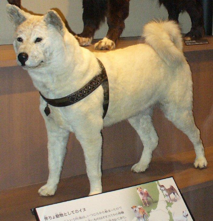 Ο σκύλος που έμεινε πιστός και περίμενε μια ζωή το αφεντικό του - εικόνα 2