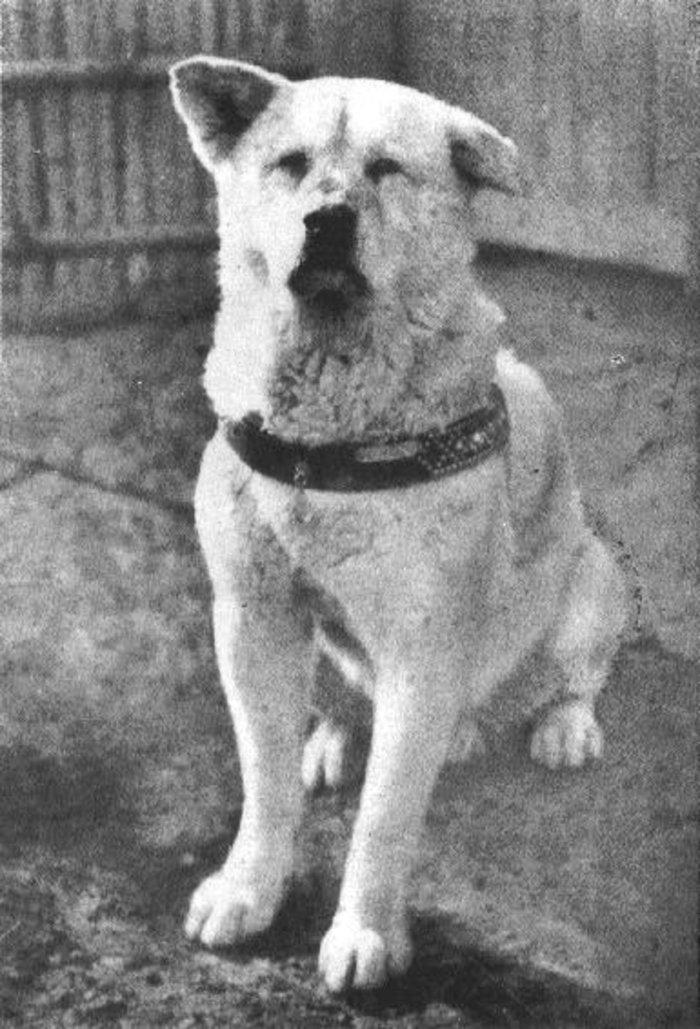 Ο σκύλος που έμεινε πιστός και περίμενε μια ζωή το αφεντικό του - εικόνα 4