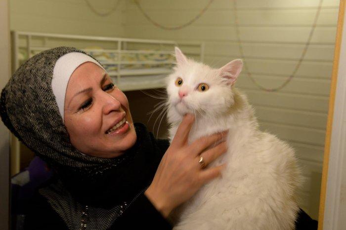 Η «Οδύσσεια» του γάτου-πρόσφυγα της Λέσβου έγινε παιδικό παραμύθι