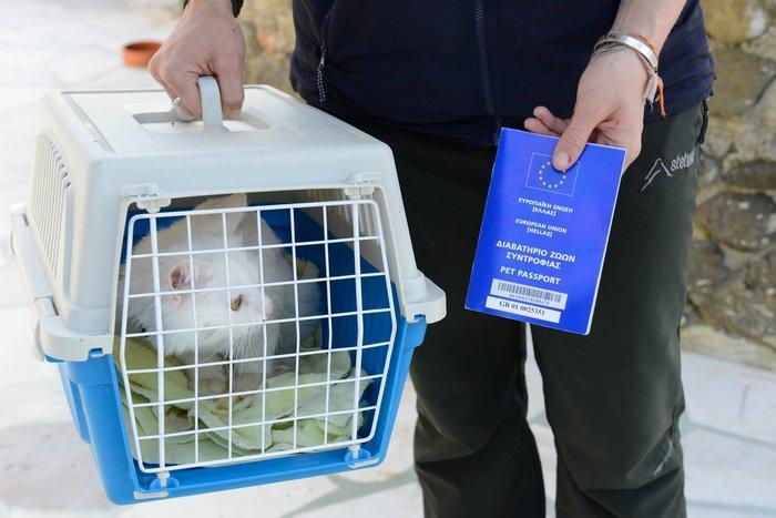 Η «Οδύσσεια» του γάτου-πρόσφυγα της Λέσβου έγινε παιδικό παραμύθι - εικόνα 2