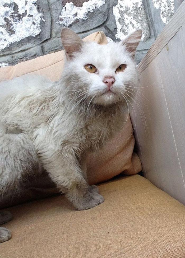 Η «Οδύσσεια» του γάτου-πρόσφυγα της Λέσβου έγινε παιδικό παραμύθι - εικόνα 3