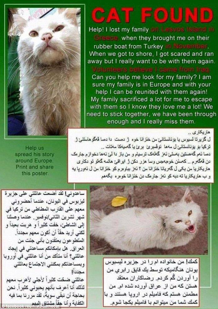 Η «Οδύσσεια» του γάτου-πρόσφυγα της Λέσβου έγινε παιδικό παραμύθι - εικόνα 6
