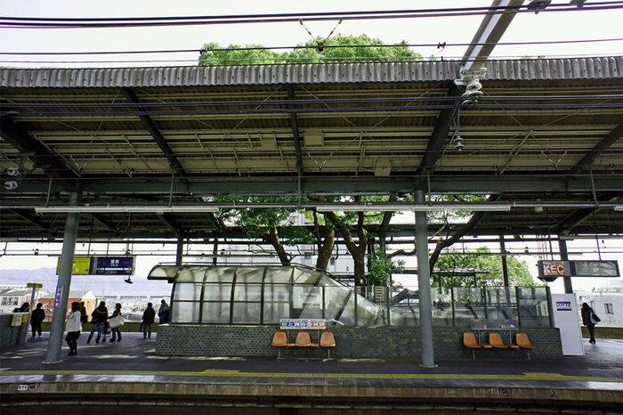 Οζάκα: Ένας σταθμός τρένου γύρω από ένα δέντρο 700 ετών - εικόνα 2