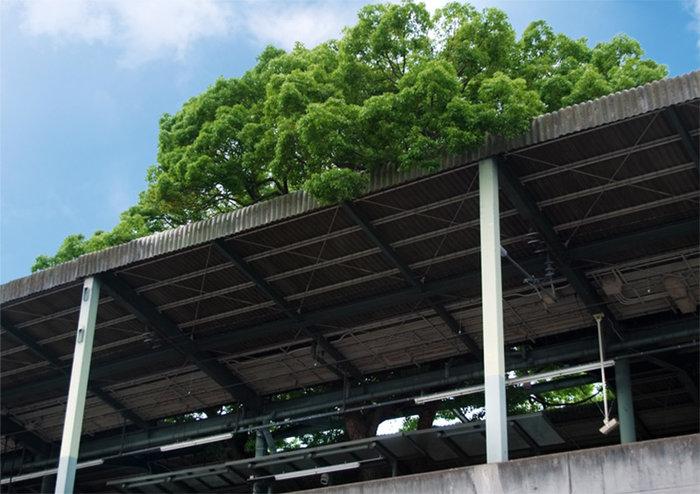 Οζάκα: Ένας σταθμός τρένου γύρω από ένα δέντρο 700 ετών - εικόνα 5