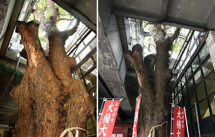 Οζάκα: Ένας σταθμός τρένου γύρω από ένα δέντρο 700 ετών - εικόνα 6