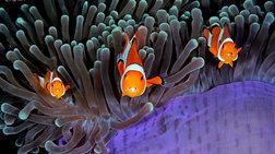 Ο θαυμαστός υποβρύχιος κόσμος μας σε 17 εξωπραγματικές εικόνες