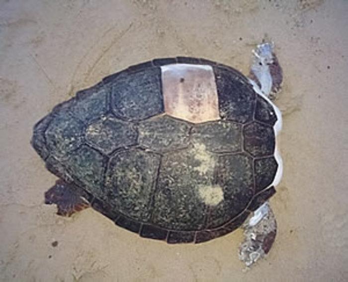 Θηριωδία στη Νάξο: Αποκεφάλισαν 10 θαλάσσιες χελώνες