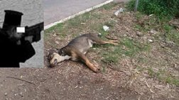 Ιερέας σκότωσε δύο σκυλιά μπροστά σε μικρά παιδιά στην Πάτρα