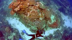 argopethainei-o-megalos-koralliogenis-ufalos-tis-australias