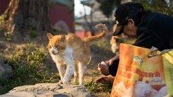 Η Ταιβάν απαγόρευσε την κατανάλωση κρέατος σκύλου και γάτας