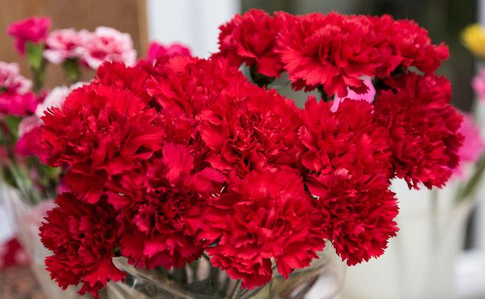 Μάθετε τους συμβολισμούς των λουλουδιών πριν τα χαρίσετε - εικόνα 3