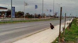 Η απρόσμενη επίσκεψη ενός μαυρόγυπα στην Αλεξανδρούπολη