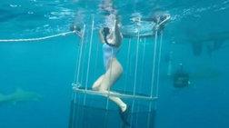 Ο καρχαρίας δάγκωσε την πορνοστάρ μέσα στο κλουβί