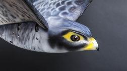 Με ρομποτικό γεράκι θα διώχνουν τα πουλιά από το αεροδρόμιο