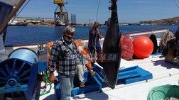Ψαριά 470 κιλών στη Σέριφο με δύο τεράστιους τόνους