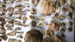 Βρήκαν θησαυρό με αρχαία σε αποθήκη στη Χαλκιδική