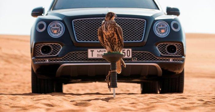 Ισως το γεράκι να νομίζει ότι η Bentaya Falconry είναι δικιά του και για αυτό ποζάρει με τόση υπερηφάνια!