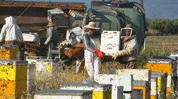 Επιδρομή μελισσών στο Αργος: Ανατροπή φορτηγού με μελίσσια [βιντεο-φωτο]