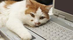 «Προσλαμβάνουν» γάτες κατά του εργασιακού στρες!