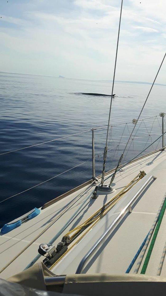 Φάλαινα 12 μέτρων ξάφνιασε τουρίστες στη Σύρο