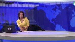 Λαμπραντόρ εισβάλλει σε στούντιο την ώρα του δελτίου ειδήσεων [Βίντεο]