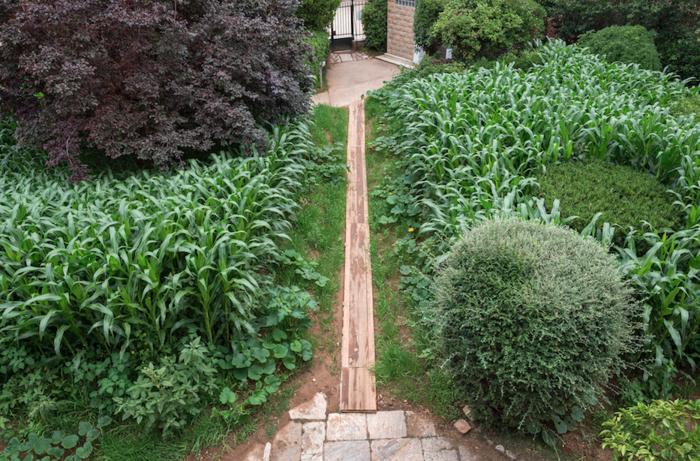Η μεταμόρφωση του Αστεροσκοπείου σε έναν κατάφυτο κήπο - εικόνα 8