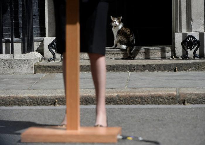 Ποια Μέι; Ο γάτος Λάρι... αυτοδύναμος στην Ντάουνινγκ Στριτ