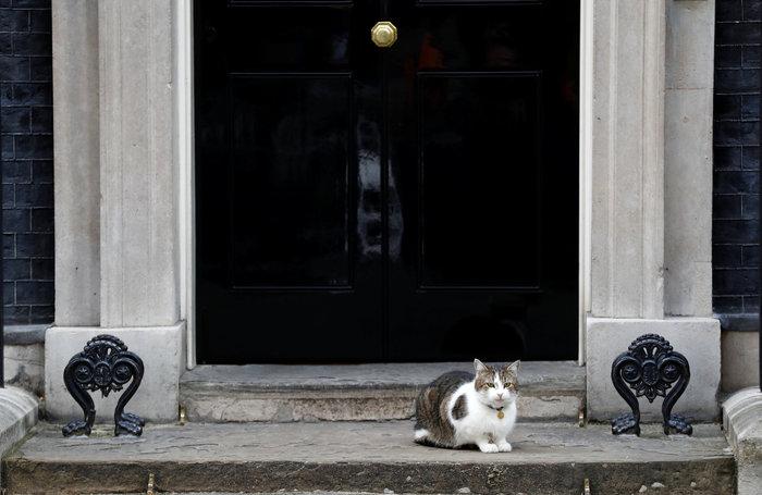 Ποια Μέι; Ο γάτος Λάρι... αυτοδύναμος στην Ντάουνινγκ Στριτ - εικόνα 3