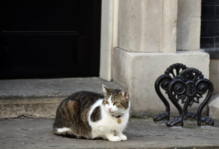 Ποια Μέι; Ο γάτος Λάρι... αυτοδύναμος στην Ντάουνινγκ Στριτ - εικόνα 6