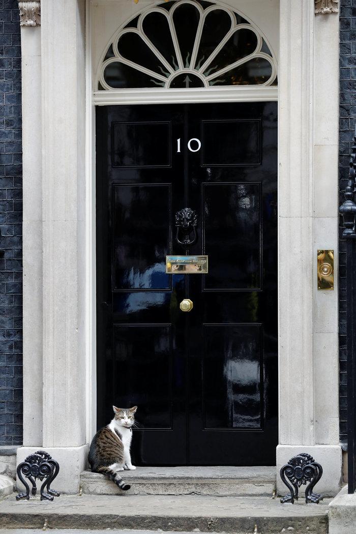 Ποια Μέι; Ο γάτος Λάρι... αυτοδύναμος στην Ντάουνινγκ Στριτ - εικόνα 7